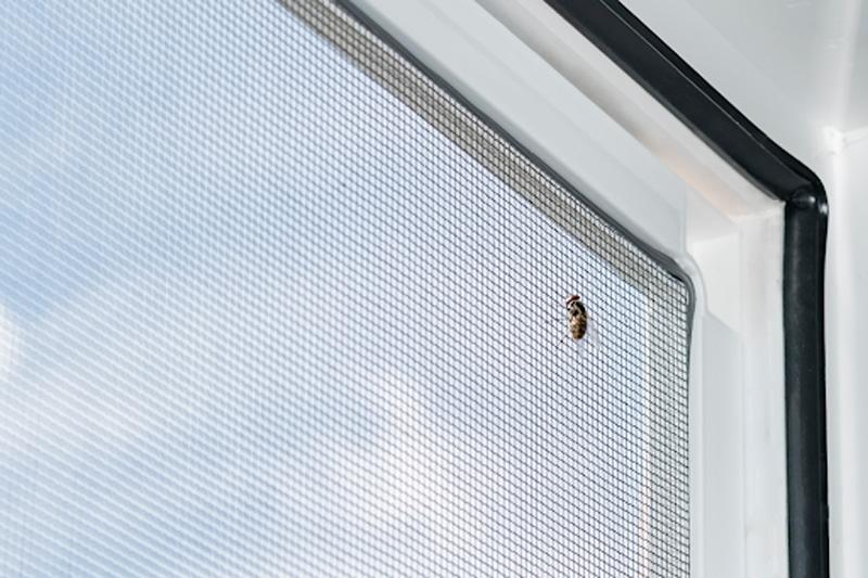 elegir una mosquitera para tu vivienda